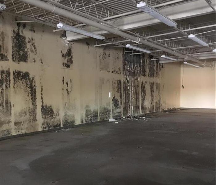 Warehouse with commercial mold damage on the sheetrock