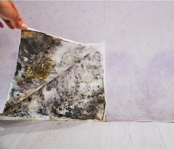 hand peeling wall paper back and revealing mold