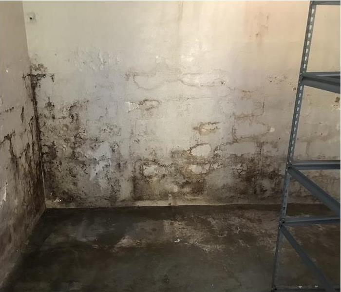 mold growing in storage area
